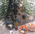 The most powerful spiritual herbalist in Nigeria 08117409635